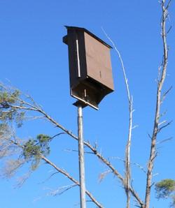 Bat Houses Don't Help
