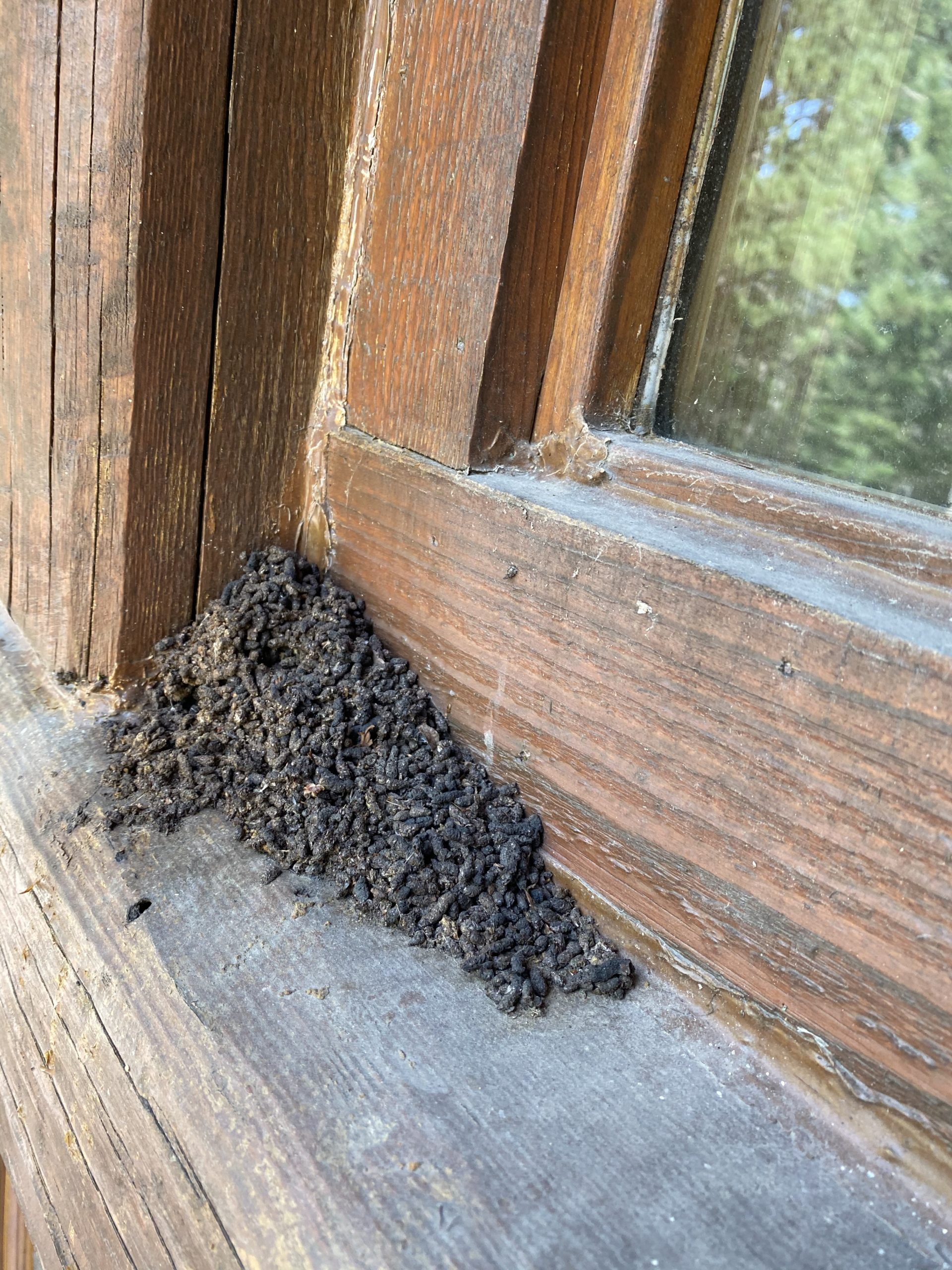 Buildup of bat guano in the corner of a window recess.